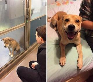 Трогательные фотографии собак, сделанные до и после того, как они обрели свой дом
