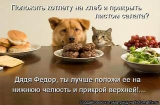 Большая порция отличных кошкоматриц