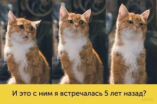 Коты с богатой мимикой