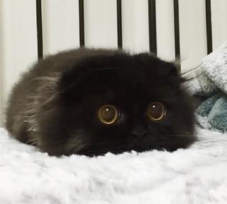20 замечательно-умилительных фотографий маленьких котят