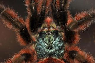 Самый красивый паук