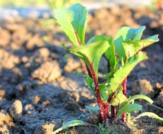Что посеять и посадить в огороде в июне