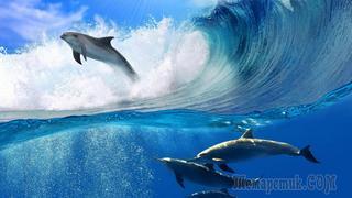 25 необычных фактов о дельфинах