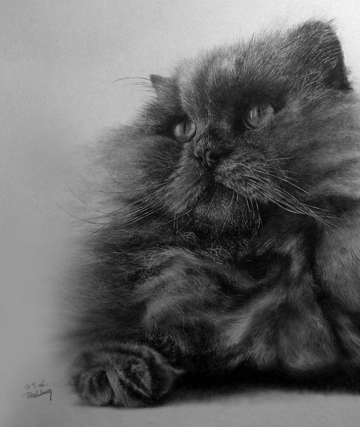 drawncats02 Мастер карандашного наброска   Пол Ланг