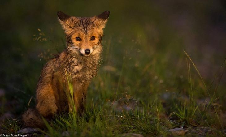 Животный мир Скандинавии животные, скандинавия, фотограф
