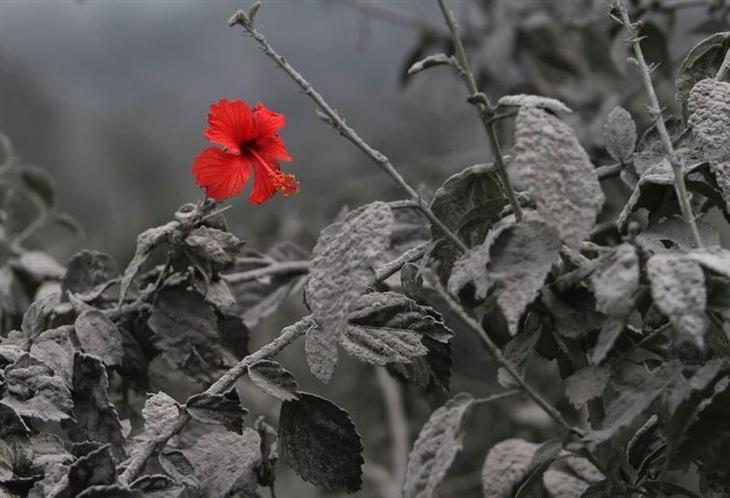 12. Чёрное, белое... и красное красота, удивительное рядом, фото, фотошоп