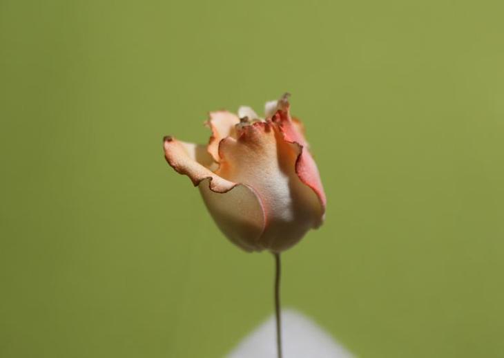 Нежнейшие розы из фоамирана