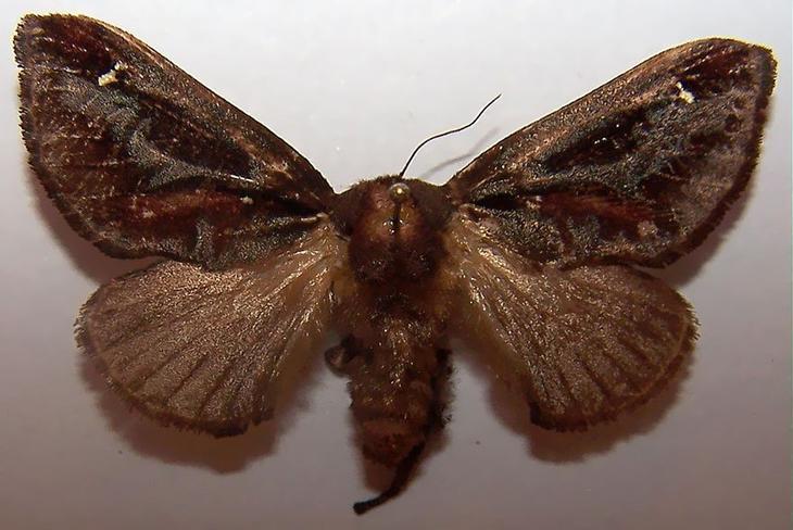 caterpillar-moth-butterfly-before-after-metamorphosis-3-2