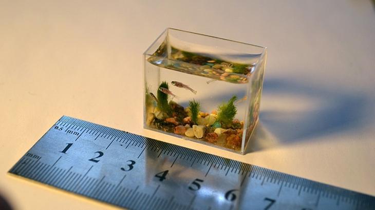 Аквариум в интерьере: интересные идеи: <b>Мини-аквариум</b>. Это самый маленький в мире аквариум, в котором помещается всего 2 чайные ложки воды. Миниатюрное чудо выполнено из стекла,
