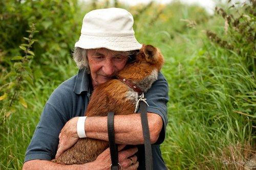 Лисицы не хотят уходить от спасшего их человека