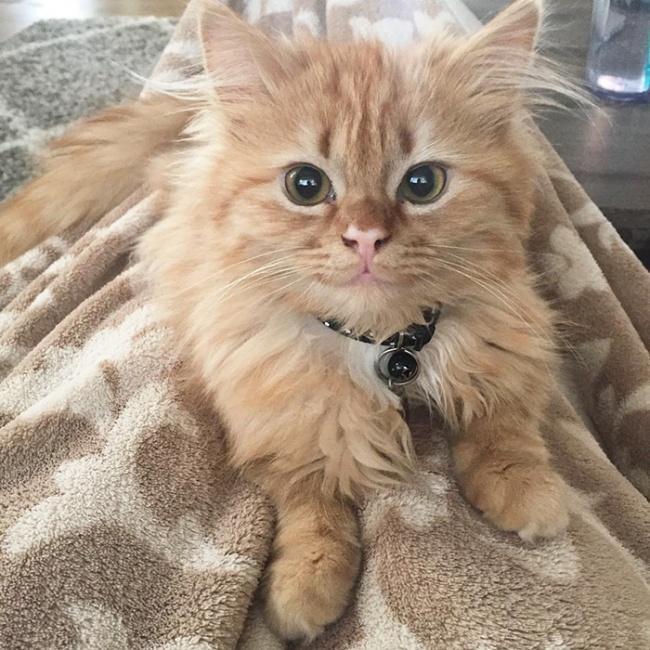 Котика забрали из приюта, и теперь он не перестает улыбаться