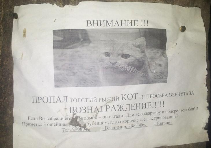 Иногда объявления настолько неординарные, милые и остроумные, что хочется непременно помочь животные, коты, прикол, юмор