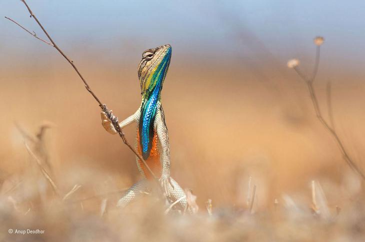 Народный фотограф дикой природы 2015