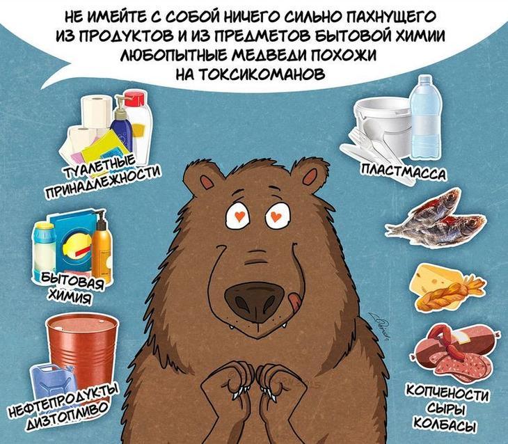 факты о медведях, медведи и туристы, что знать туристу о медведях