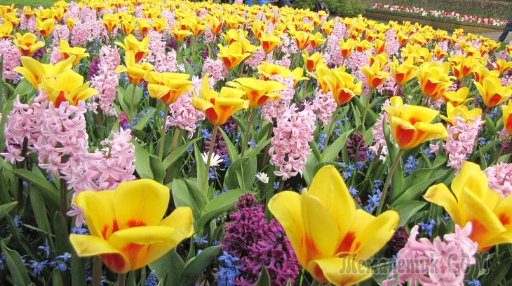 Нидерланды. Прогулка по королевскому парку цветов Кёкенхоф (Часть 1)