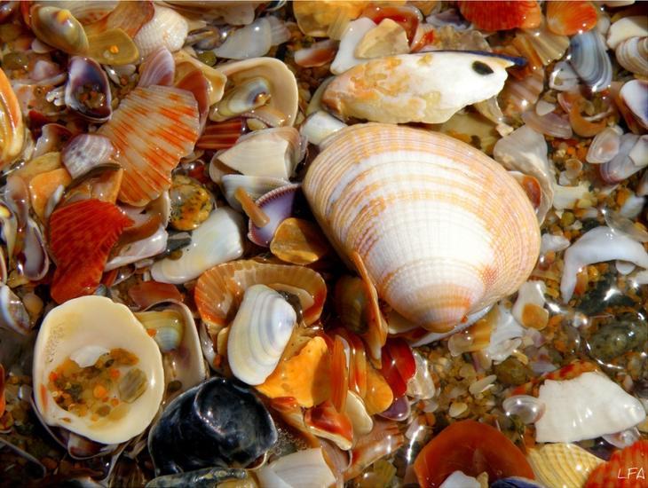 Разноцветные морские раковины. Фото