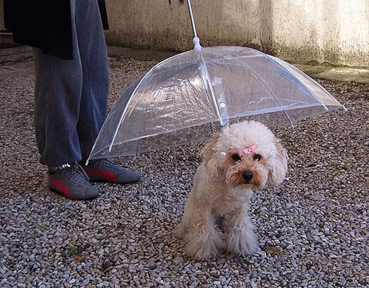 Umbrellas18 19 удивительных зонтов для осени