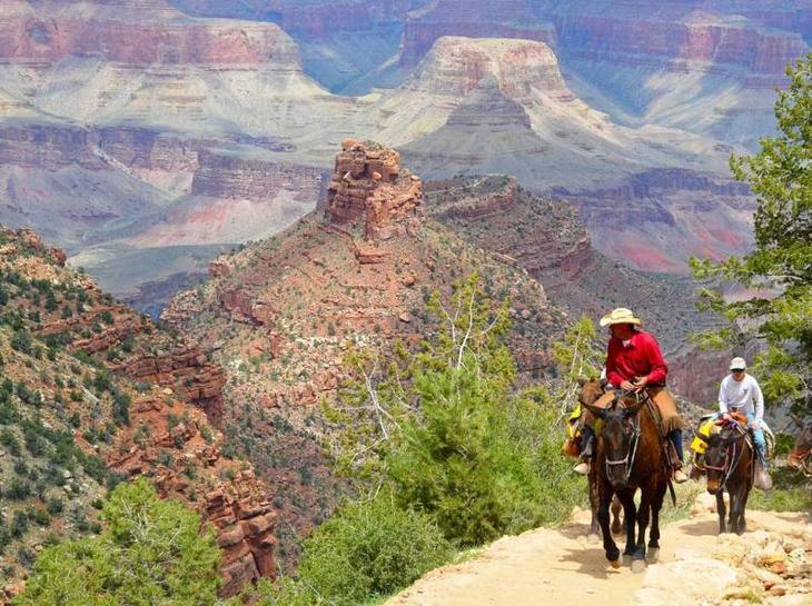 grand-canyon-mule-rides