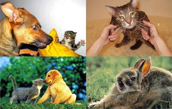 Программа про животных nature