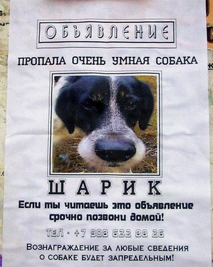 Остроумные объявления о пропаже животных, которые заставят улыбнуться животные, коты, прикол, юмор