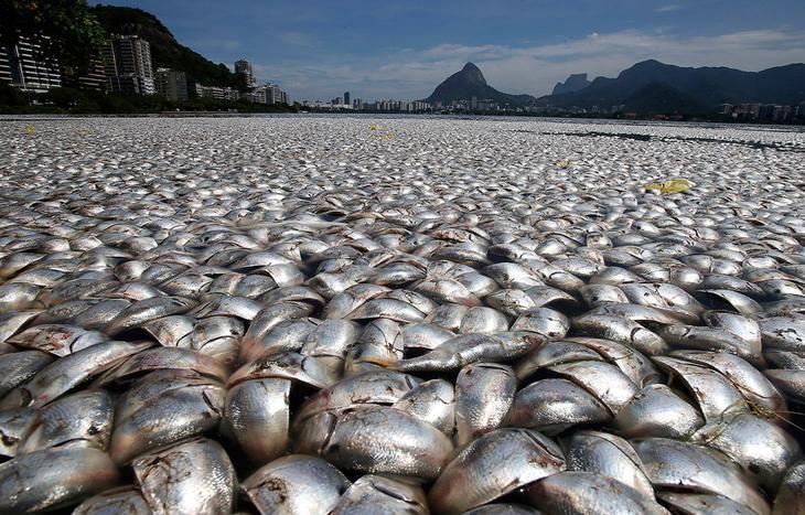 рыба в тайланде которую ловят в грязной воде