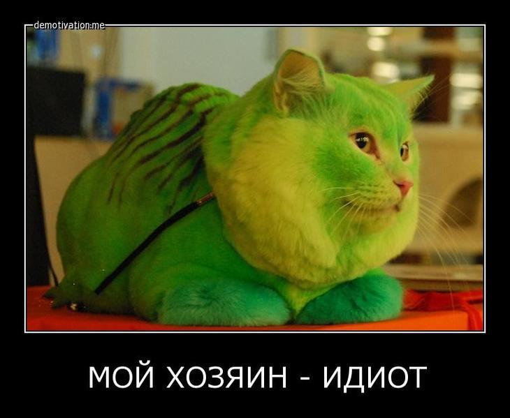 Мой хозяин идиот животные, идиот, кот, прикол, собака, хозяин
