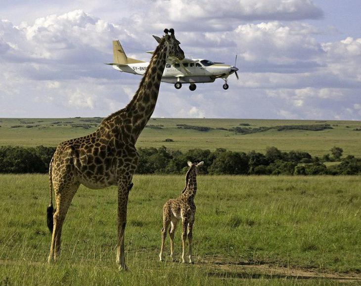 3. Пускаем с сыном самолетик прикол, фотки, юмор