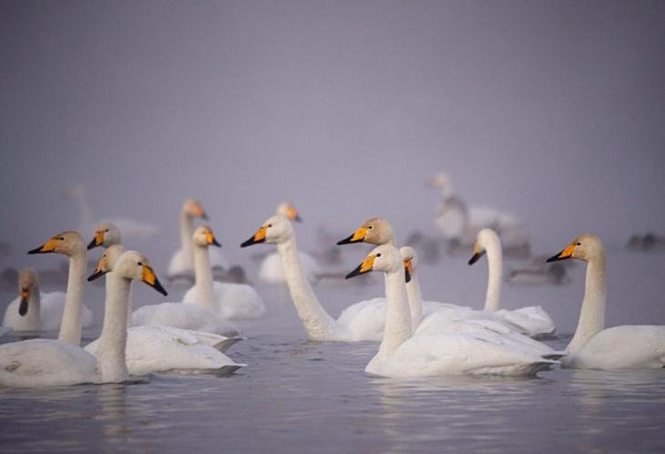 Жемчужина Алтая: Лебединое озеро