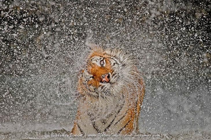 7. Вода сегодня просто прелесть прикол, фотки, юмор