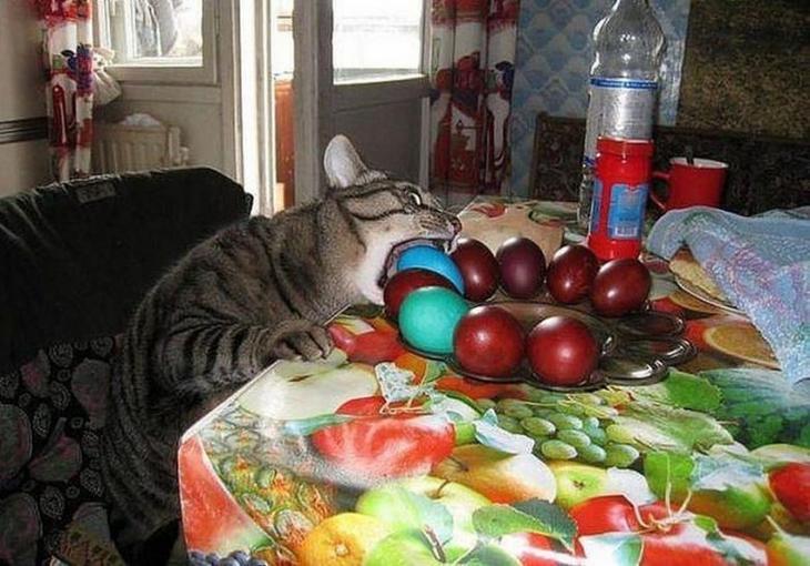 Когда реально очень хочется поесть