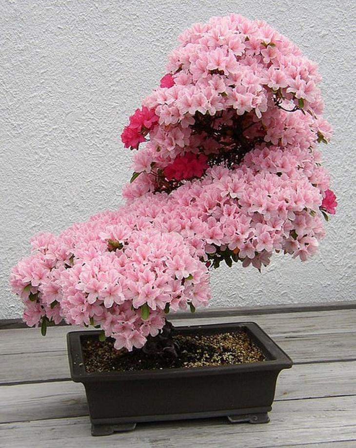Деревья Бонсай бонсай, растения, своими руками, сделай сам, хобби