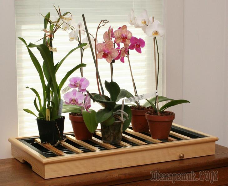 Цветы уход за орхидеями в домашних условиях