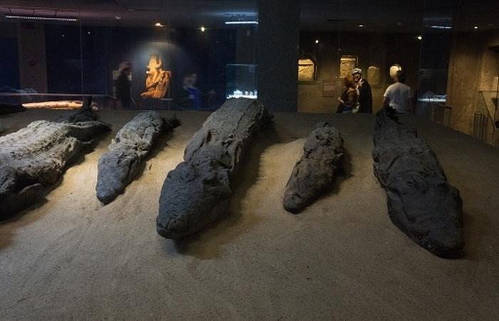 Мумифицированные крокодилы.