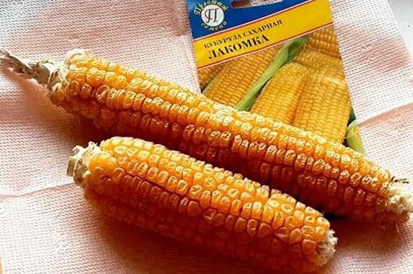 кукуруза сорта лакомка