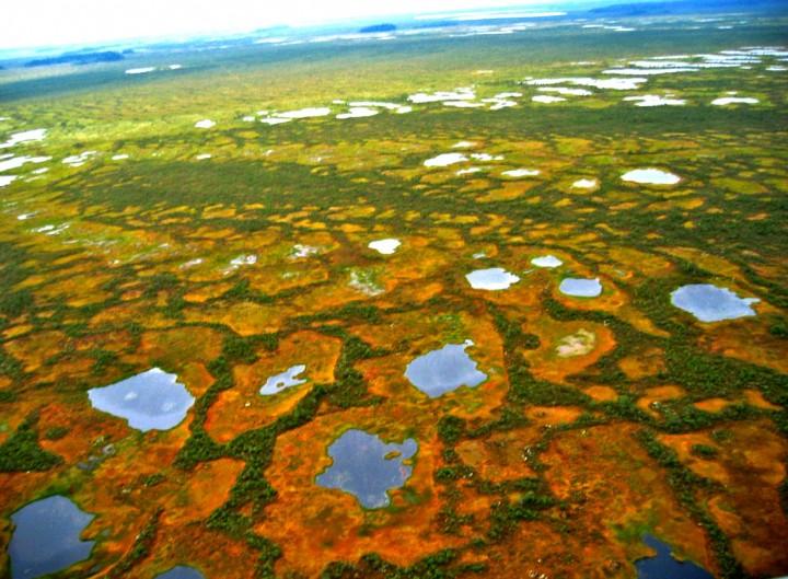 материал замечательно в сузунском осиновское месторождение торфа осушено новосибирская область это