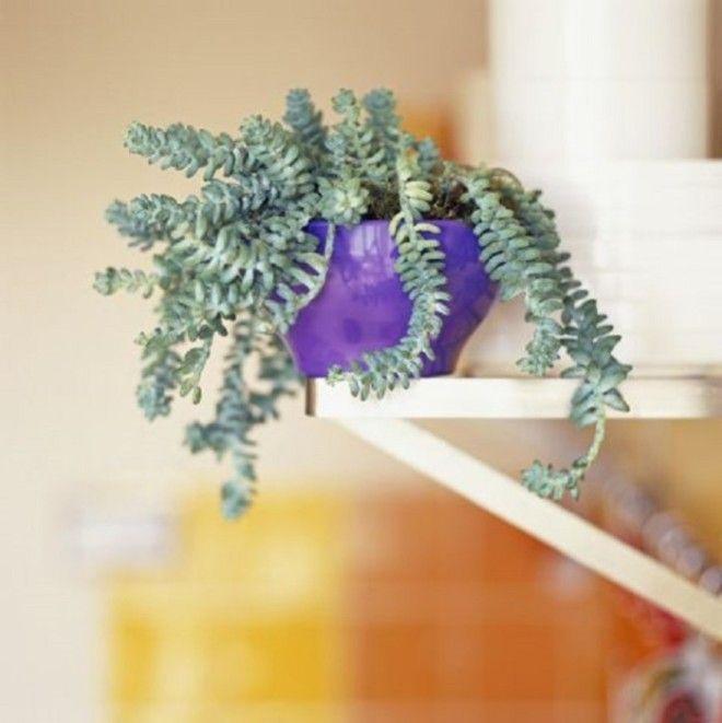 Комнатные растения которые словно с другой планеты