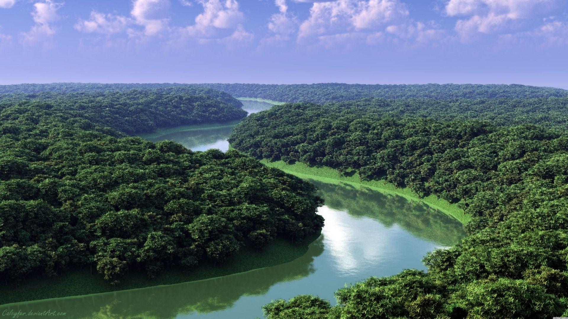 Леса бразилии загрузить
