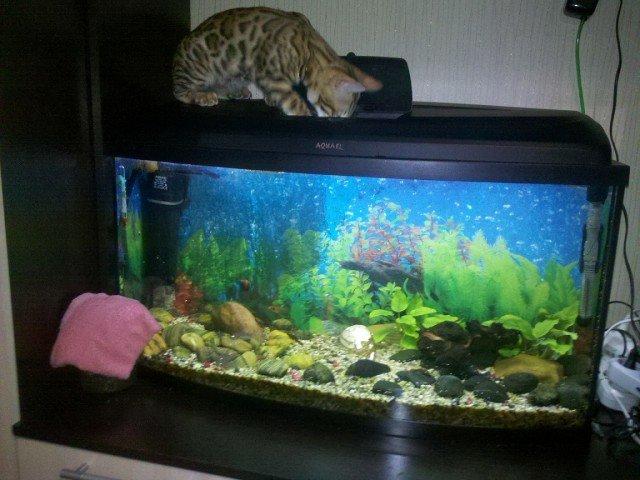 Аквариум – это телевизор для кошек животные, коты, прикол, юмор