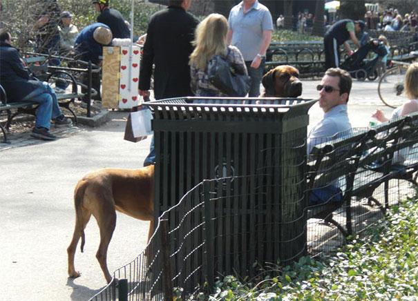 25 удачных кадров с собаками-26