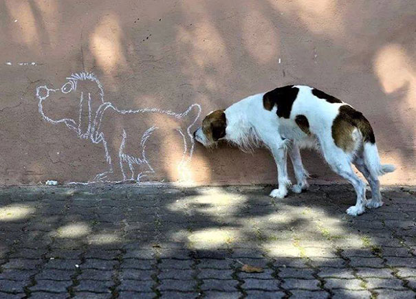 25 удачных кадров с собаками-2