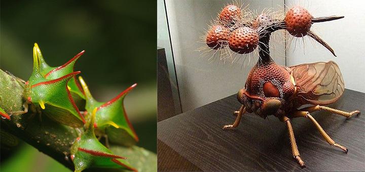 Самые странные, уродливые и ужасные насекомые мира (18 фото)
