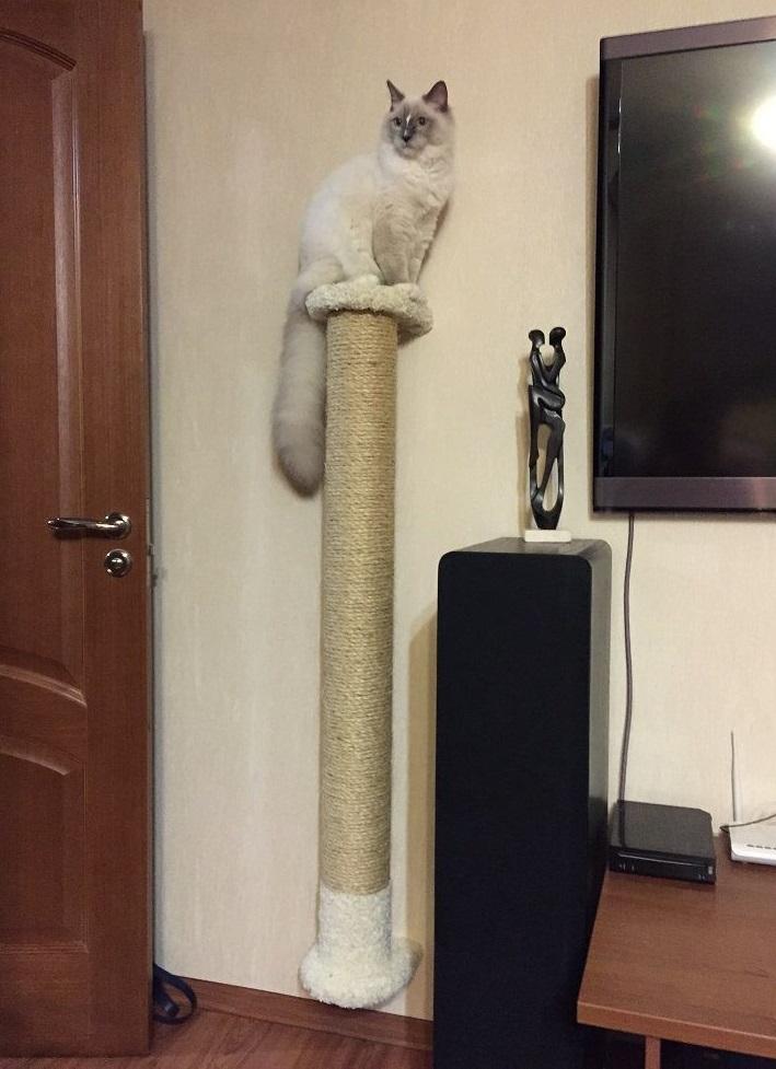 Большой столб-когтеточка для тех, кто предпочитает высоко сидеть и далеко глядеть