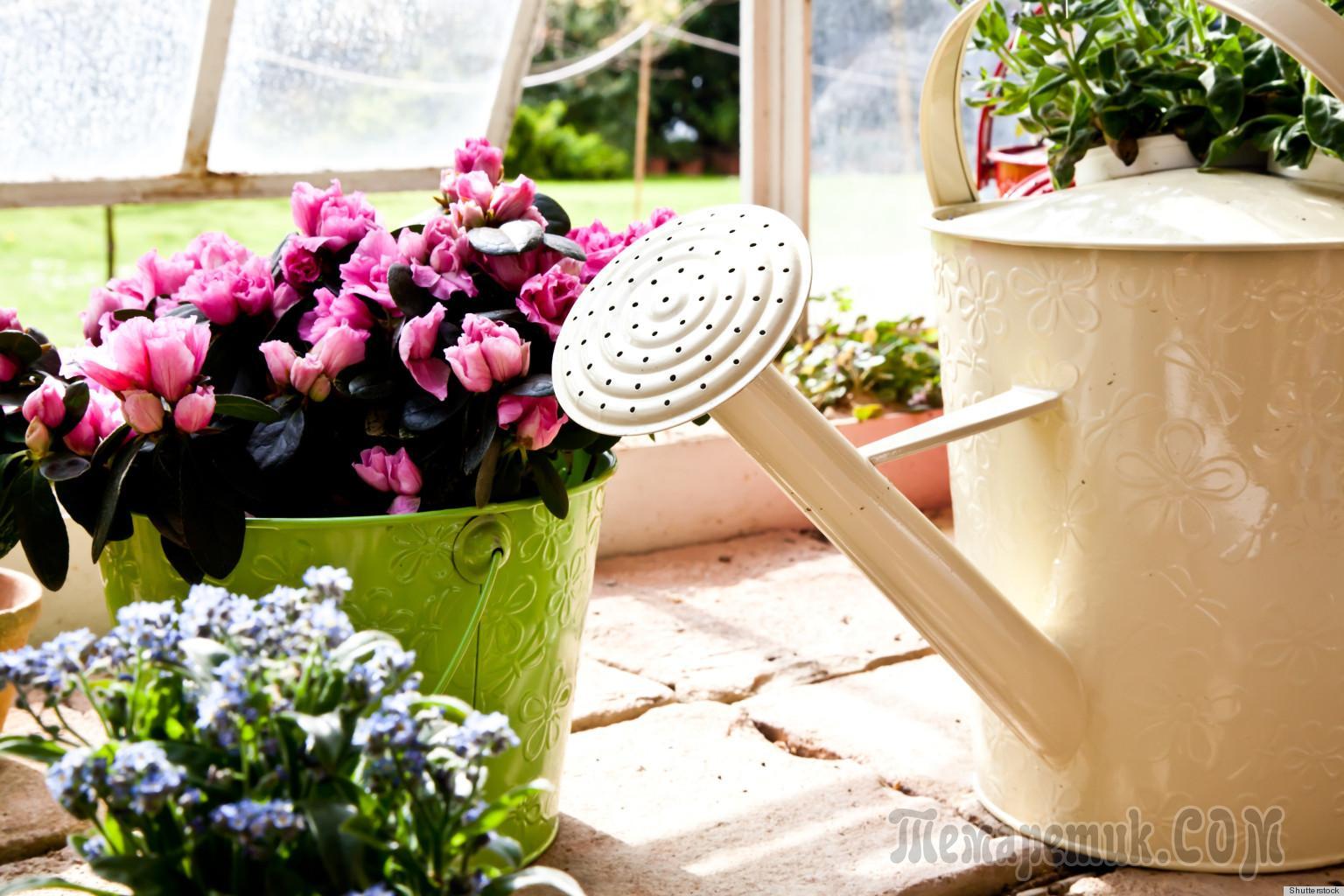 Как удобрять дрожжами комнатные цветы