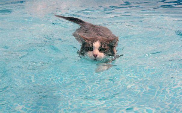 """""""Сломанные"""" коты, которые обожают воду"""