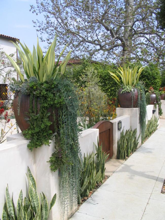 Крассула в оформлении декоративной изгороди