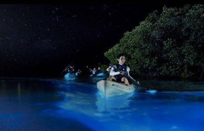 Залив Москито, Вьекес, Пуэрто-Рико Это самое популярное в Пуэрто-Рико место, в которое приезжают посмотреть на свечение планктона. Местный планктон считается самым ярким. До залива обычно добираются на каяках.