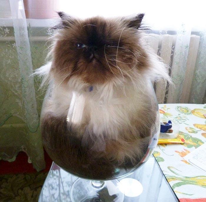 жидкие кошки, Растаявшие коты, доказательство того что коты жидкие
