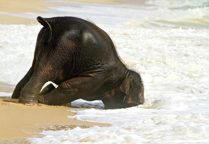 Мимишные гиганты детеныши, животные, слоненок