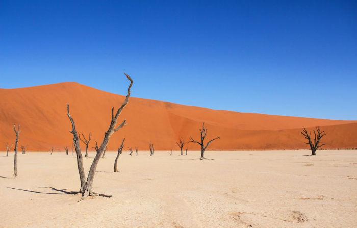 Пустыня выжжена солнцем и иссушена ветрами.