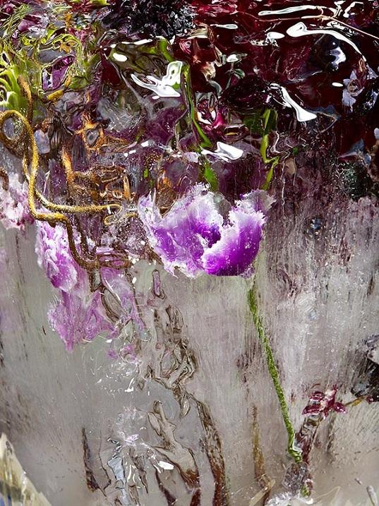 Замороженные цветы от Кэндзи Сибата. Фото
